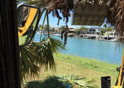 remove-trees-excavator